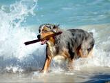 Les plages autorisées aux chiens en France