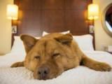 Les 5 meilleurs hôtels pour chien aux États-Unis