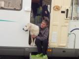 Voyager avec son chien en camping-car