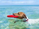 Emmener son chien en vacances : les vacances du chien