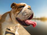 Comment protéger son chien des dangers liés à la chaleur et au soleil ?