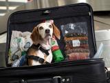 Retour de vacances : la rentrée pour les chiens