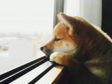 Partir en vacances sans son chien
