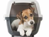 Quelles sont les conditions d'importation d'un chien en France ?