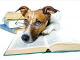 10 idées reçues sur le chien