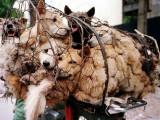 Yulin: le massacre du solstice d'été