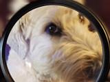 Les proverbes sur les chiens