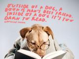Les citations sur les chiens
