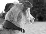 11 commandements afin d'être un bon maître pour son chien