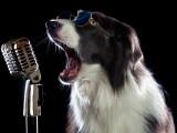 25 chansons autour des chiens