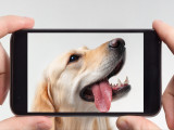 Comment réussir une séance photo avec son chien ?