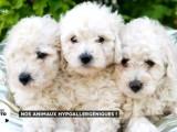 Quelques solutions pour remédier à l'allergie aux animaux