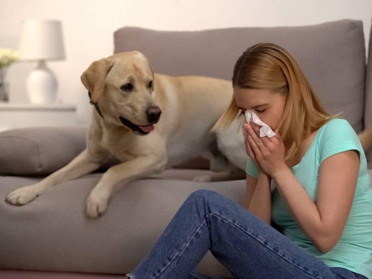 Les Races De Chiens Les Plus Hypoallergeniques