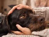Le toucher chez le chien