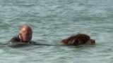ce Terre-Neuve est le sauveteur en mer le plus célèbre d'Angleterre