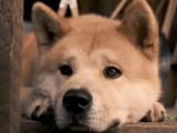 Hatchi : bande-annonce du film