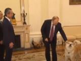 Wladimir Poutine présente sa chienne Yume aux journalistes japonais
