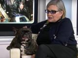 Gary, le chien de la princesse Leia est orphelin