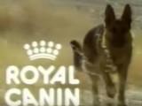 Publicité Royal Canin