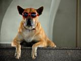 20 chiens de stars
