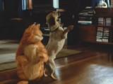 Garfield et Odie