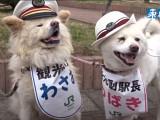 Japon: La gare d'Ajigasawa recrute deux nouveaux chefs de gare