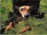 Un chien prend la pose pour des pochettes de disques