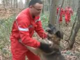 Ulis, l'un des plus vieux chiens sapeurs-pompiers de France