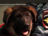 Dobrynya, le chien offert par la Russie à la France, ne pourra pas intégrer le RAID