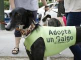 Comme chaque année au mois de février, 50 000 chiens vont être «éliminés» en Espagne