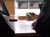Un chien agent immobilier devient héros d'une publicité