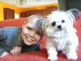 Norbert, le minuscule chien de thérapie d'un hôpital de Los Angeles