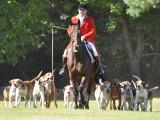 Les chiens dans la chasse à courre