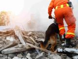 Chien héros : 20 chiens d'élite au destin exceptionnel