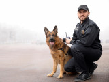 Les chiens policiers d'assaut et les chiens d'intervention / défense