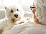 Les Seniors et leur animal de compagnie