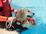 Le travail du chien à l'eau : chasse, sauvetage en mer...