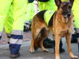 Les chiens de recherche et de sauvetage