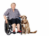 Les chiens d'assistance pour personne handicapée