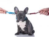 Que dit la loi pour mon chien en cas de divorce ?