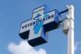 Seulement 5 centres hospitaliers vétérinaires conformes