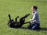 A Bruxelles, les chiens s'obstinent à délaisser la laisse