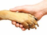 La Protection des Animaux