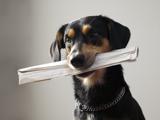 La Suisse invente le permis pour chien