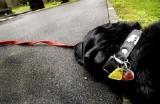 Suisse - Les propriétaire de chiens n'échapperont plus à l'impôt