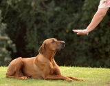 Faut-il supprimer les cours de formation pour les propriétaires de chiens en Suisse?