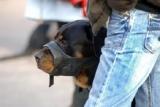 Les ratés du permis de détention de chiens dangereux