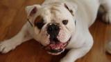 Responsabilité civile : les chiens doivent être assurés