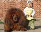 Après l'enfant unique, la Chine impose la politique du chien unique