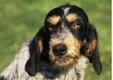 A qui  le chien en cas de séparation des propriétaires  ?